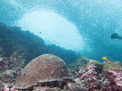 brianleungphotography-26 (brianleung5895) Tags: tortoise fish reef seaworld sea diving ilovetravel photoofday photooftheday photographer travel travelphotography wonderful wonderfulworld moalboal cebu philippines momentwithbrian epl3 olympus hkig