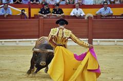 Talavante en Alicante (Fotomondeo) Tags: toro toros plazadetoros corridadetoros torero matador bull bullfight bullfighter bullring spain españa lashoguerasdesanjuan fogueres alejandrotalavante