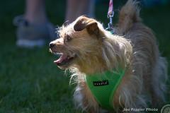 2017 Lung Love Portland 5k (Joe Frazier Photo) Tags: 5k love lungloveportland portland cancer cause charity costume dogs donate fun fundraiser laurelhurst lcaorg lung lungcancerawareness run walk