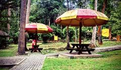 https://foursquare.com/v/taman-botani-negara-shah-alam/4de8f511d4c0faa5643bdd4a #holidays #travel #garden #green #nature #Asian #Malaysia #selangor #shahalam #度假 #旅行 #大自然 #绿色 #公园 #亚洲 #马来西亚 #雪兰莪 #沙阿南 (soonlung81) Tags: 大自然 度假 马来西亚 shahalam malaysia green holidays garden 沙阿南 公园 旅行 亚洲 nature selangor 雪兰莪 绿色 asian travel