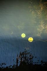 Imitation (Jayson McIvor) Tags: abstract waterlillies