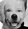 Clovis vs Dog (François Tomasi) Tags: garçon boy child clovis monochrome blackandwhite noiretblanc montage animal dog chien françoistomasi yahoo google flickr france europe pointdevue pointofview pov lights light lumière portrait composition photoshop photo photography photographie yeux juillet 2017 filtre