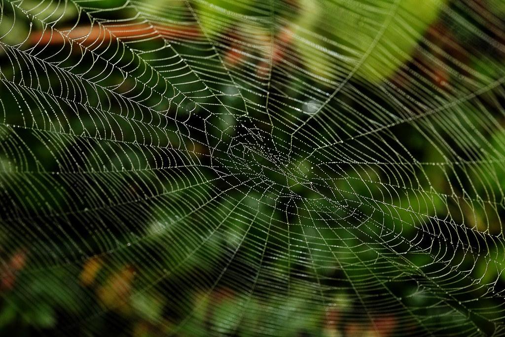 araign e de maison france segu maison