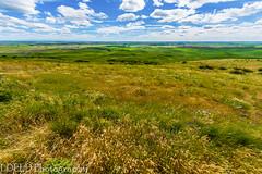 NT3.0091-WP170617_67249-Edit (LDELD) Tags: palouse washington steptoebutte fields wheat