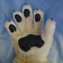 My Right Hand (Coyoty) Tags: flickrfriday myrighthand furry fursuit furryfandom costume coyote white brown black blue hand righthand claws anthropomorphics paw squareformat square bodypart close closeup cosplay fun fur mascot
