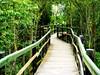 Por la pasarela... (Nati C.) Tags: catalunya girona parcnatural aiguamolls naturaleza paisaje pasarela hdr nik efectoorton