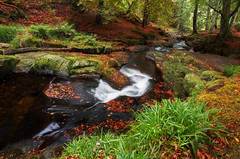 Forest scene in Autumn (Wailin...) Tags: canon6d wicklow ireland autumn forest brook stream nature canon1740mm