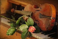 _MG_0053b - 20.06.2017 (hippo1107) Tags: harmonium rose geige violine tasteninstrument notenblatt musik music canon eos 70d canoneos70d juni 2017