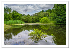 Lake at the Warmely Forest Park (Travels with a dog and a Camera :)) Tags: lightroom cc england plants water lake photoshop 2015 pond reflection warmley forest park 2017 pentax summer k70 digital bristol dog walking july art south west tamron af 18200mm f3563 xr di ii ld asperical if macro uk justpentax dogwalking lightroomcc pentaxart pentaxk70 photoshopcc2015 southwest tamronaf18200mmf3563xrdiiildaspericalifmacro warmleyforestpark unitedkingdom gb