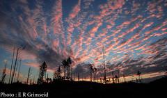 Sunrise , Skageskogen (2000stargazer) Tags: skageskogen bergen norway sunrise twilight clouds heaven sky horizon trees silhouette dark landscape nature canon morning