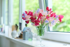 Sweet peas (Kym.) Tags: backhome blue colours flower fragrance gift glass green greensflowers home lathyrus pink present purple red summer sweetpea violet window windowsill thenetherlands