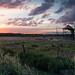 free-range sundown