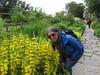 Troutbeck-Windermere-17.18 (davidmagier) Tags: aruna flowers gardens historicsite sunglasses nearsawreyhawkshead cumbria england gbr
