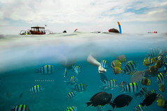 "Fishes. (¡arturii!) Tags: wow amazing awesome superb interesting stunning impressive nice beauty great arturii arturdebattk ""canonoes6d"" gettyimages travel trip tour route viatge holidays vacations gili island paradise snorkeling fish colors colorful underwater waterproof girl woman sea sky"