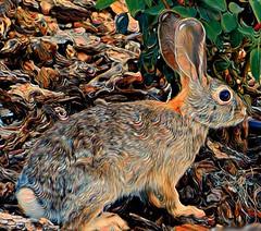 Silly Rabbit (TwinLotus II) Tags: coolpix painnt coolpixb500 rabbit