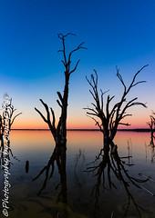 IMG_5457 (biglaptogs) Tags: barmera lakebonney riverland sa states sunsetsunrise