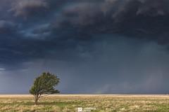 USA - Keyes, Oklahoma - Stranded In A Storm (Sarah Al-Sayegh Photography | www.salsayegh.com) Tags: usa canon canoneos5dmarkii stormchase storm oklahoma keyes landscapephotography landscape tree cloud wwwsalsayeghcom sarahhalsayeghphotography infosalsayeghcom