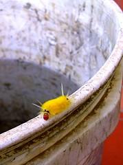 WORM - GUSANO (erregx) Tags: gusanos gusano worms worm