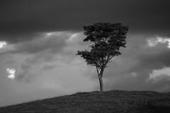 Tree (7730) (Jorge Belim) Tags: flora pb