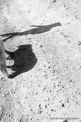 No sólo es una foto, sino lo que significa #perro #dog #sombras #shades #2016 #bolnuevo #mazarrón #murcia #españa #spain #animal #love #senderismo #trecking #naturaleza #nature #paisaje #landscape #blancoynegro #blackandwhite #photography #photographer #p (Manuela Aguadero) Tags: blackandwhite landscape españa sonystas 2016 sonya350 sonyimages animal nature senderismo spain picoftheday photography murcia shades sombras sonyalpha sonyalpha350 paisaje love photographer trecking blancoynegro alpha350 perro naturaleza dog bolnuevo mazarrón