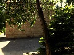 Nutsubidze Plato, Tbilisi, Georgia (Anna Gelashvili) Tags: nutsubidzeplato tbilisi georgia тбилиси грузия tree ნუცუბიძისპლატო თბილისი საქართველო ხე ხეები ფოთლები leaf