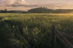 Evening Sun on the Rape Field (Netsrak) Tags: rape rapefield raps rapsfeld nebel fog mist sun tomburg fence zaun landscape light licht grass gras europe europa