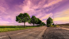 Trees along the road (YᗩSᗰIᘉᗴ HᗴᘉS +6 500 000 thx❀) Tags: tree trees road sualée namur belgium belgique red pink green color sky hensyasmine