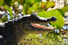 Pantanal 323 (tommasodonelli) Tags: pantanal