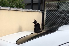 Today's Cat@2017-06-26 (masatsu) Tags: cat thebiggestgroupwithonlycats catspotting cameraphone apple softbank iphone