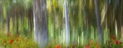 The Woods Are Lovely ... (Christina's World aka Chrissie Bee) Tags: landscape painterly stilllife creative textures abstract nature plants flowers trees green red colorful impressionism garden california sandiego unitedstates digitalart artistic