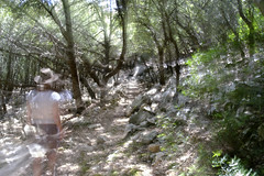 She disappeared into the forrest (nokkie1) Tags: mallorca spain forrest woman movement zoom longexposure disappearing trees light shadow