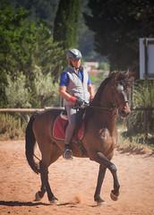 IMG_2052 (TessAnjel) Tags: horse training animal wild cheval espagnol dressage equitation galop trot bai canon photography 55250mm