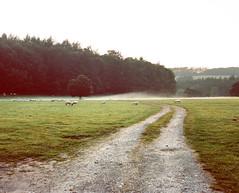 Mist at Dusk (Benjamin Driver) Tags: ullswater lakedistrict england uk road tree trees wood woods forest green grass film 120 medium mediumformat format pentax pentax67 6x7 6 7 160 portra portra160 kodak 105mm f24 scape landscape landscapes scan mist dusk flare 2015 quiet