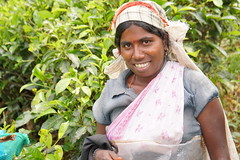 Sri Lanka, tea pickers (48) (walterkolkma) Tags: srilanka tea pickers teapickers centralhighlands nuwaraeliya strathdon teaestates women laborers tamils sonya6300