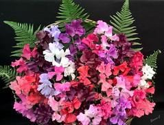 The Sweet Smell of Success! (Eleanor (No multiple invites please)) Tags: flowers sweetpeas floralarrangement hamptoncourt flowershow london phone july2017