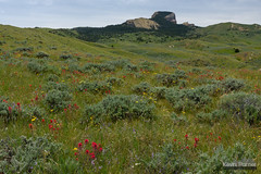 Heart Mountain Base (kevin-palmer) Tags: heartmountain cody wyoming absarokamountains june spring summer nikond750 afternoon tamron2470mmf28 wildflowers sunny blue sky clouds