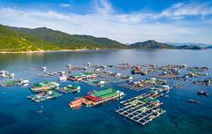 Biển Bình Hưng, Cam Ranh, Việt Nam (daihocsi [(+84) 918.255.567]) Tags: bluesea vietnam