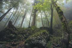 Wanderlust (@hipydeus) Tags: forest wald bayern bavaria fog mist märchen nebel nature landscape fairytale paris agreement