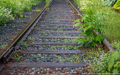 -The Old Tracks (westrock-bob) Tags: traintrack greenvegetation rails cuthill ties canon rocks 6d summer copyright green steel peterborough history ontario canada eos railway outdoors railroad