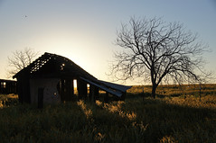 """Here Comes The Sun"" (nedlugr) Tags: california ca sanluisobispocounty carrizoplain carrizoplainnationalmonument usa house tree sunrise silhouettes shadows ruins ruraldecay ruralwest oncewashome"