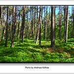 Andreas Kalbow Landschaft 2017.05.21 Fischland Darß (1) thumbnail