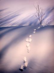 Fairy Trail (Astroredg) Tags: winter landscape fairy winterland trail path pathway chemin paysage hiver minimaliste minimalist traces paysdesmerveilles canada quebec stfelixdekingsey hill pente colline snow neige shimmer miroiter purple blue bleu pourpre tree arbre féérique footsteps pas