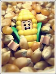 Nubbin (LegoKlyph) Tags: lego custom ear corn nubbin food eat minifigure popcorn scared buried