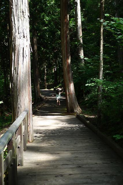きちんと整備された散策路 子どもも安心して歩けます|赤沢森林資料館