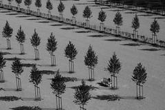 Pensées bien ordonnées (cactus2016) Tags: blackandwhite noiretblanc géométrie humanandgeometry chambord rythm streetphotography rue