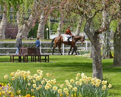 The paddock in spring (andycam78) Tags: horse equestrian horseracing panasonic panasonicfz1000 coursehippique sport cheval enghien galop race gallop