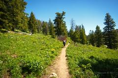 The path to Ski Lake (scepdoll) Tags: skilake philipscanyon wyoming jackson wildflowers hike arrowleafbalsamroot