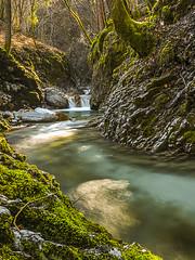 scorre lento nel bosco... (icodrom) Tags: ruscello torrente acqua dolce bosco rocce alberi tronchi cascatella alba sole muschio