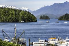 Vancouver_Island_tofino_1