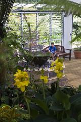 2017-06-18 Virginia Water Savill Gardens IMG_9136 (Darkstar Moody) Tags: virginiawater savillgardens plants flowers trees water ponds lakes wildlife gardens flora fauna